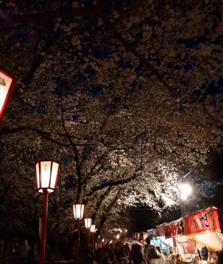 熊谷桜祭り