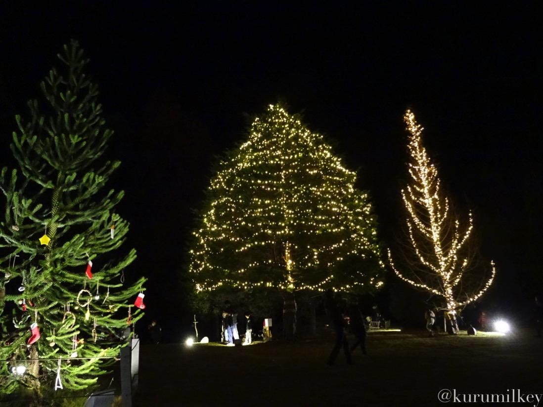 森林公園のクリスマスツリー